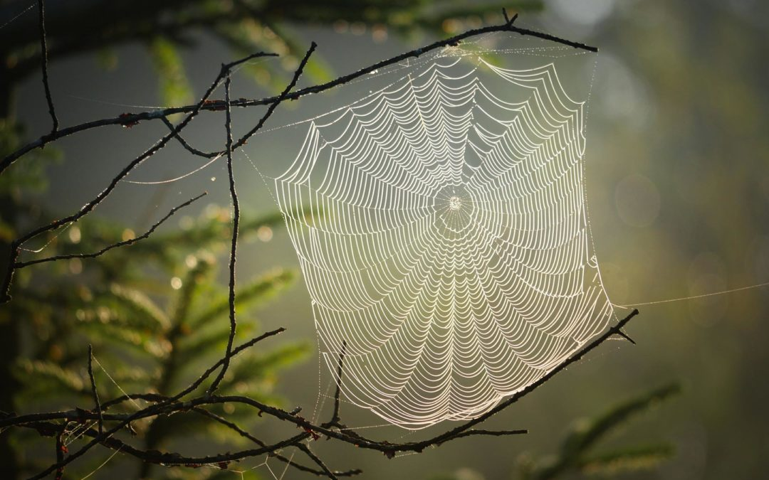 10 Eco-friendly Ways to Keep Spiders Out of Your Home